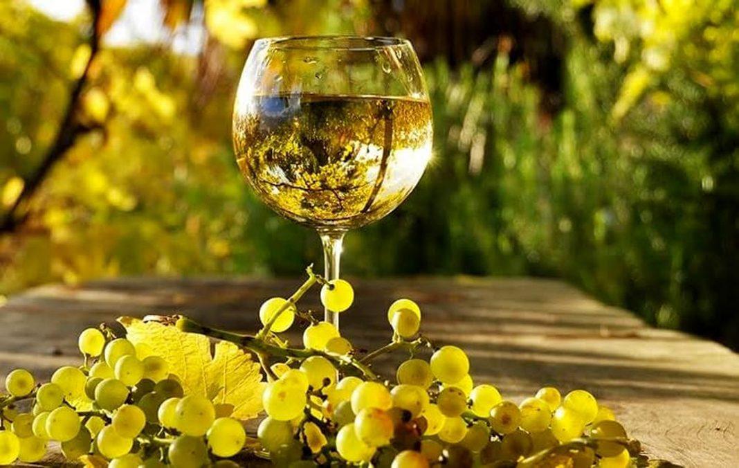 Albana vini degustazione 2 1068x676 1 Riccione Offerta Clienti Affezionati